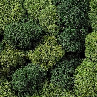 Lichen mousse vert 35g - Toutes échelles-NOCH 08610