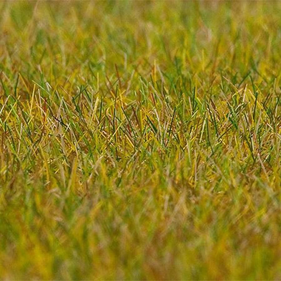 Flocages herbe de pré vert clair premium-toutes échelles-FALLER 180484