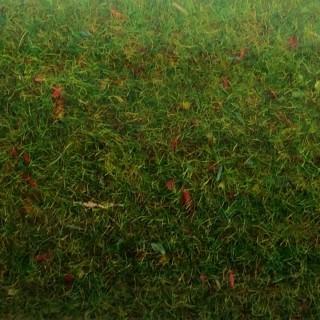 Tapis de gazon fleuri -HO-1/87-NOCH 00270