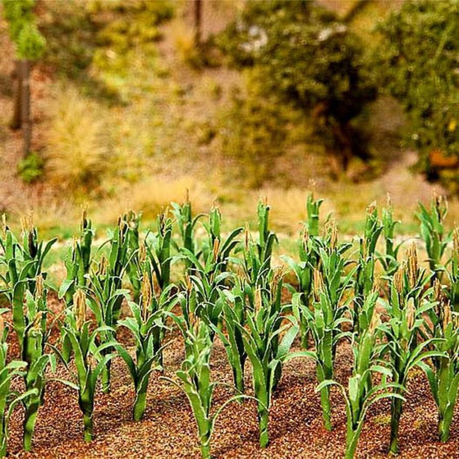 Plans de maïs pour création d'un champ-HO-1/87-FALLER 181250