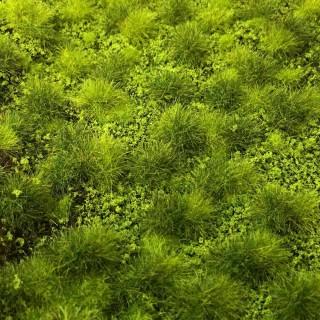 Tapis d'herbe structurée vert clair 190 par 300mm- Toutes échelles-HEKI 1880
