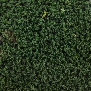 Feuillage vert foncé 200ml-HO et N- HEKI 1562