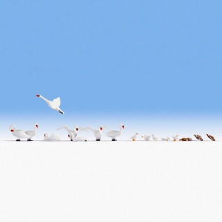 17 cygnes et canards -HO-1/87-NOCH 15774