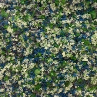 Petites fleurs 150ml - Toutes échelles-AUHAGEN 76936