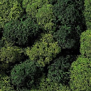 Lichen mousse vert 75g - Toutes échelles-NOCH 08621