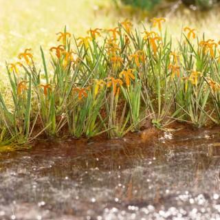 18 plants d'iris des marais Laser Cut minis-HO 1/87-NOCH 14140