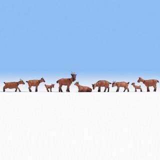 9 chèvres, boucs, chevreaux-HO-NOCH 15752